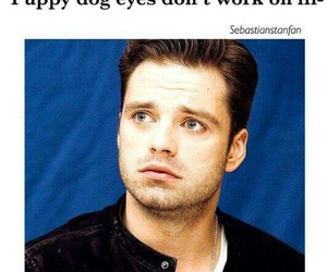 sebastian stan and cute image
