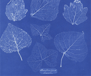 blue, leaves, and nature image