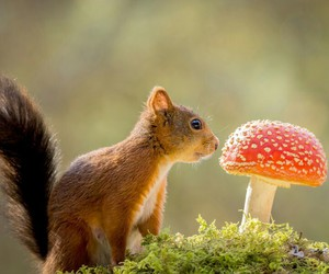 animal, forest, and tale image