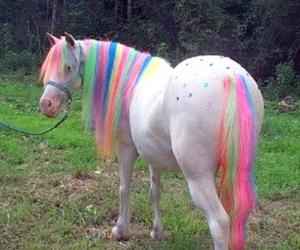 horse, rainbow, and unicorn image