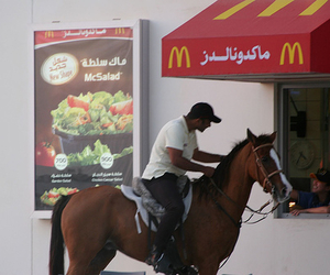 horse and mac image