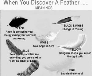 feather and magic image