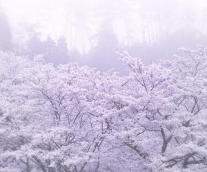 beautiful, nature, and pastel image