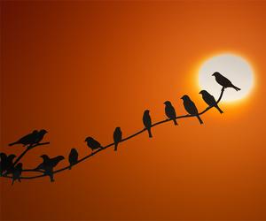 bird, photography, and sun image