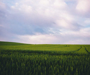 clouds, green, and field image