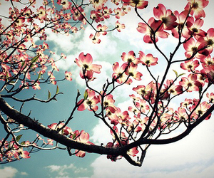 flowers, tree, and beautiful image