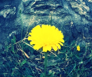 yellow and flower image
