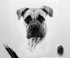 black and white and dog image