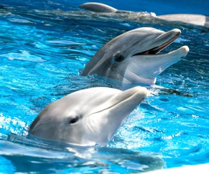 animal, dolphin, and cute image