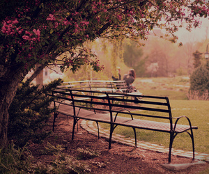 park, flowers, and nature image