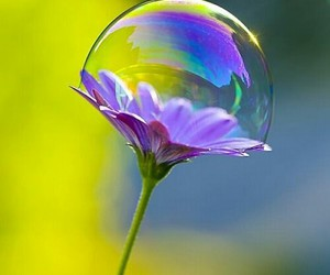 bubbles and flowers image