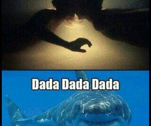 cool, fish, and funny image
