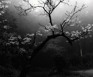 asia, beauty, and black and white image