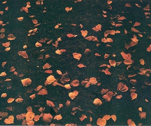 leaves, photography, and cute image