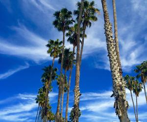 beach, california, and losangeles image