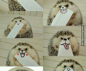 hedgehog, funny, and cute image