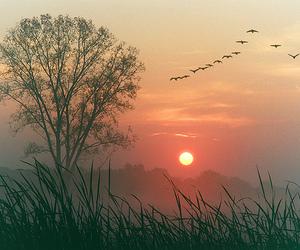 tree, bird, and nature image