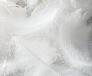 delicate, feathers, and pale image