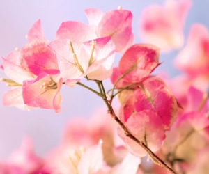 flower, gentle, and micro image