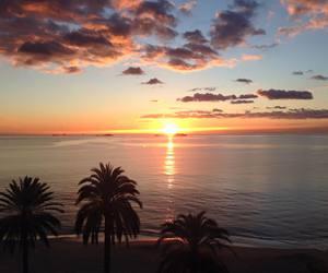 beach, ibiza, and palm trees image