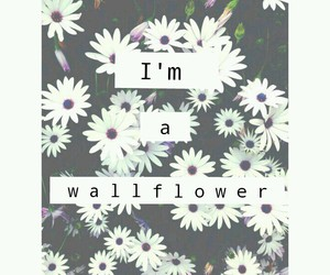 introvert, shy, and wallflower image