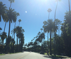la, palm trees, and Sunny image