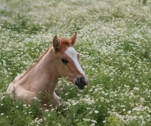 horse and meadow image