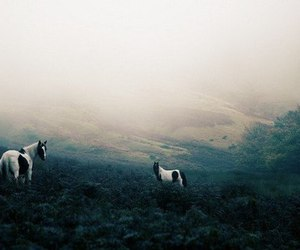 dark, horse, and mist image