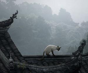 cat and china image