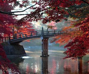 autumn, beautiful, and bridge image