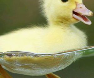 duck, cute, and animal image