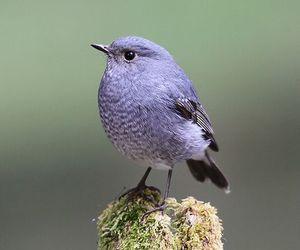 animals, birds, and wildlife image