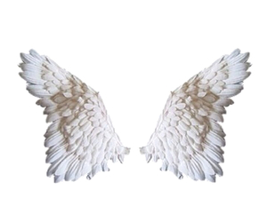 overlay, wings, and transparent image