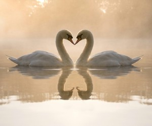 duck, animals love, and heart image