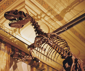 dinosaur, photography, and museum image