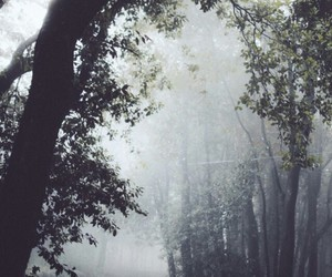 forest, background, and tree image