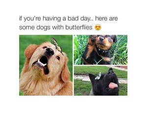 butterfly and dog image