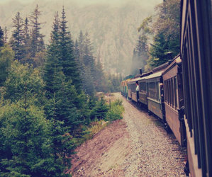 train, travel, and forest image