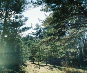 forest, trees, and wood image