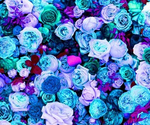 background, purple, and roses image