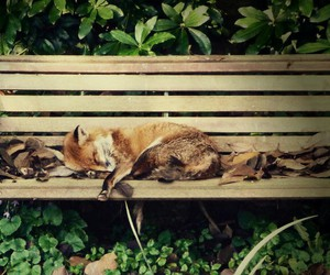 adorable, fox, and cute image