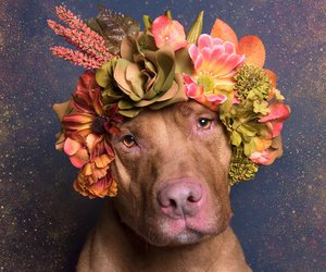 dog, flowers, and rescue image