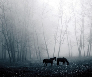 horse, dark, and forest image