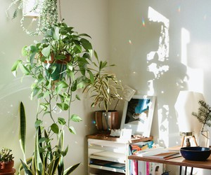 plants and indie image