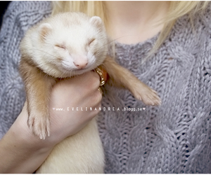 animal, ferret, and Leo image