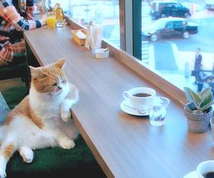 cat, gif, and animal image