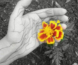 flower, photography, and veins image