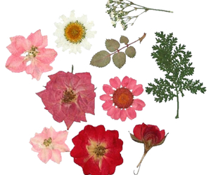 floral, png, and flowers image