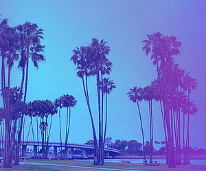 palm trees, photography, and San Diego image