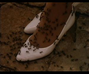 ants and naom image